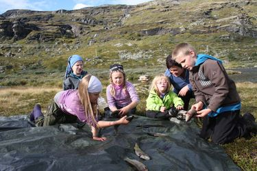 Elevar ved Aurland barne- og ungdomsskule på garnfiske i Aurlandfjellet Foto Arne Veum