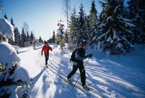 cross-country-skiing_500x338