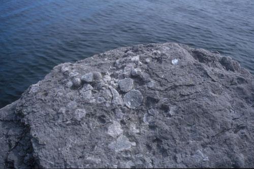 Fossile koraller