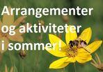 Gul sommerblomst (bilde fra Morguefile.com)