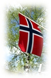 Norsk flagg i rødt, hvitt og blatt. Bjørketre i bakgrunn.