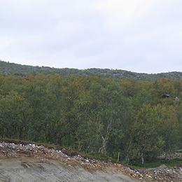 Lauvskog