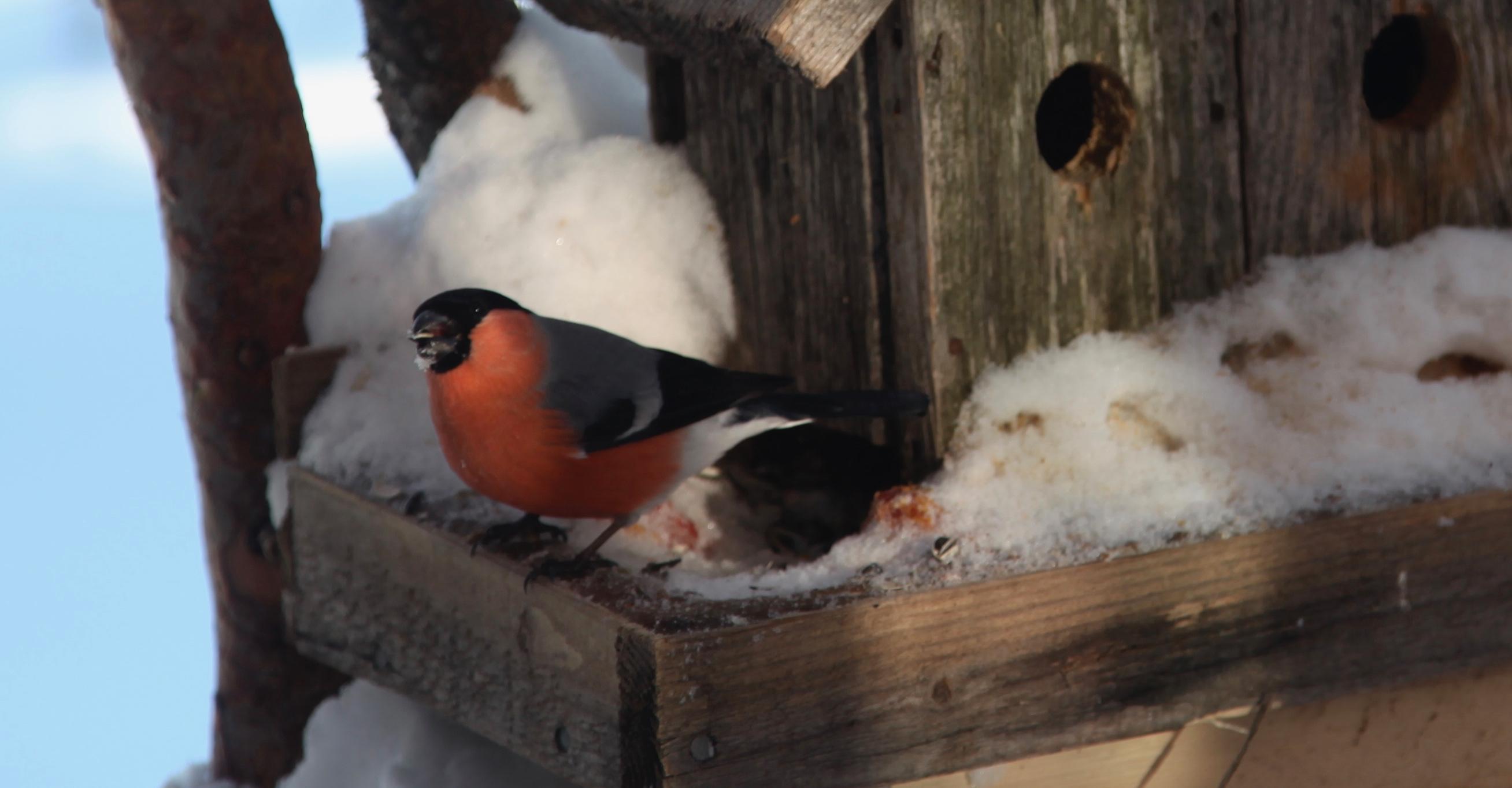 brødsmuler til småfugler