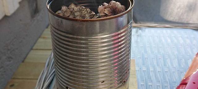 Kongler mot mygg -  Foto Torgeir Lauluten