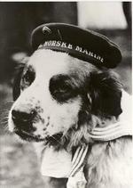 Marinehunden Bamse_150x211