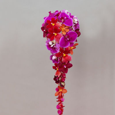 rosaorchidee