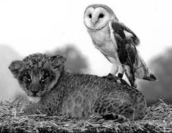owl%26pussycat