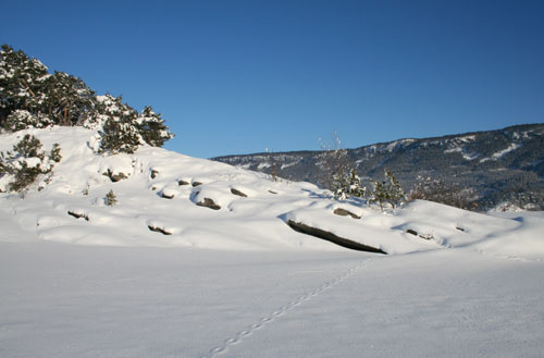 Foto: Norsk Naturarv