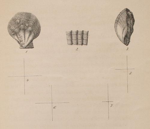 Tegninger angivelig av Brøgger. Størrelse 1:1.