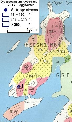Drakehode-på-Heggholmen-201.jpg