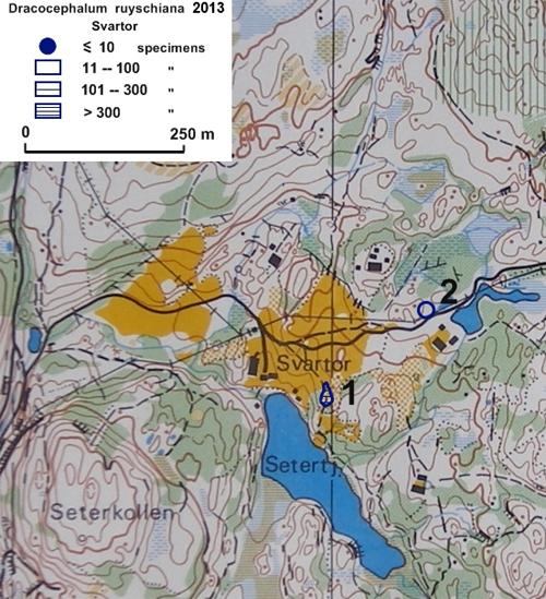 Drakehode-på-Svartor-2013.jpg