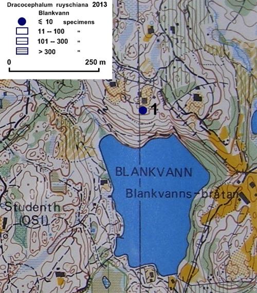 Drakehode-ved-Blankvann-201.jpg