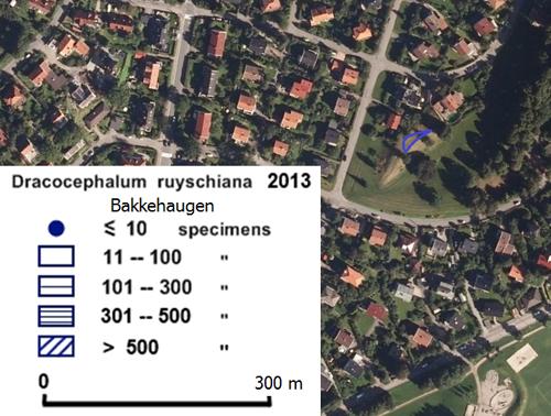Drakehode-på-Bakkehaugen-20.jpg