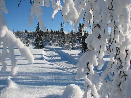 Skiløyper i snødekt vinterlandskap