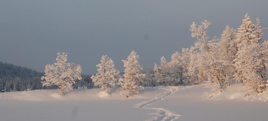 Snø og skiløype   mittsigdal   Maria Haga