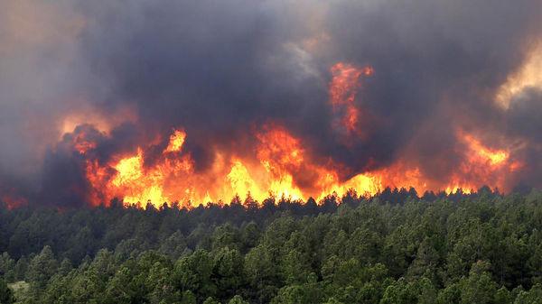 Brann i skogen