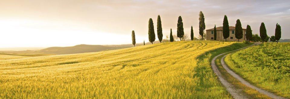 Italia sypresser.jpg