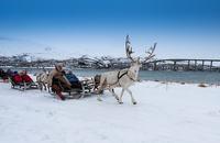Reindeer Sleding with Tromsø Lapland