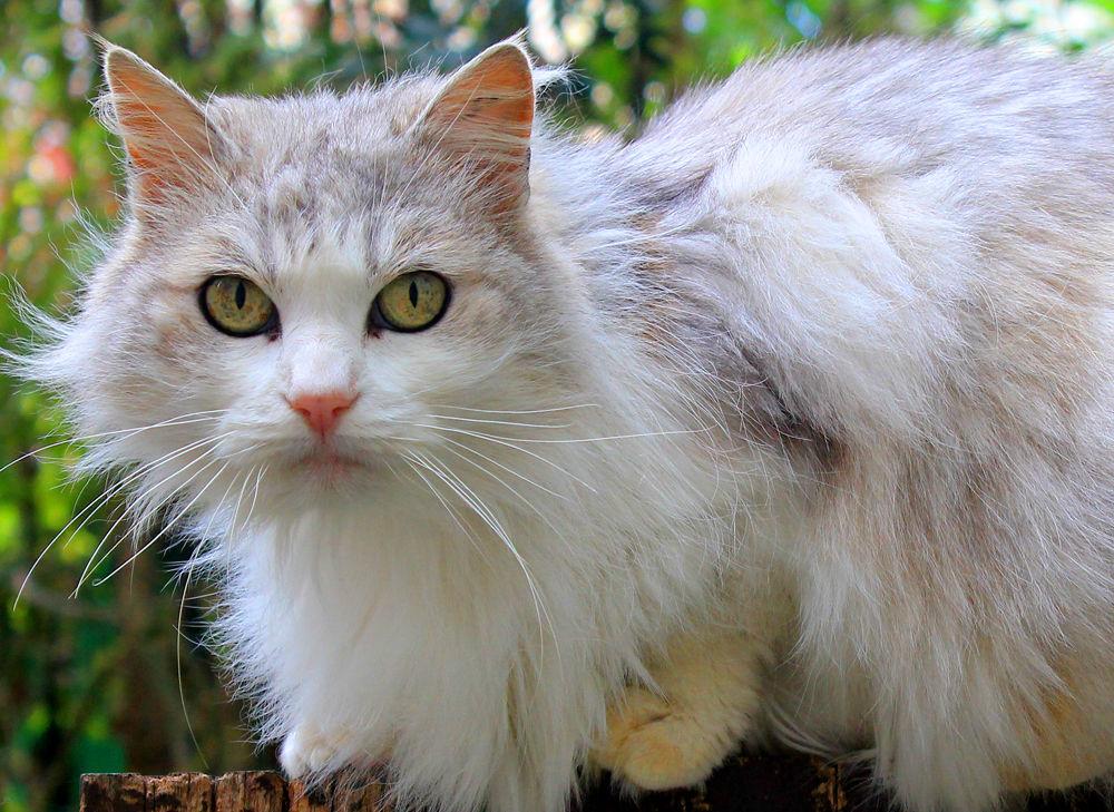 katt[1]
