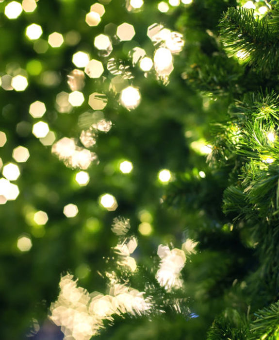 50244641 - close up of a green christmas tree.