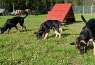 Hunder i lek