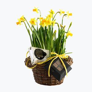 190199_blomster_plante