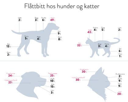 KatterOgHunder