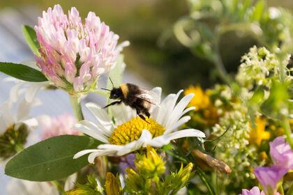 Blomst foto Honorata Gajda
