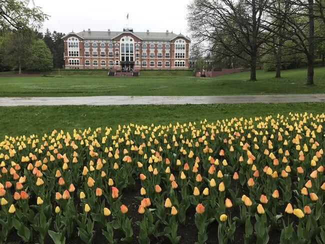 Hovedbygningen på NMBU med blomster i forgrunnen.
