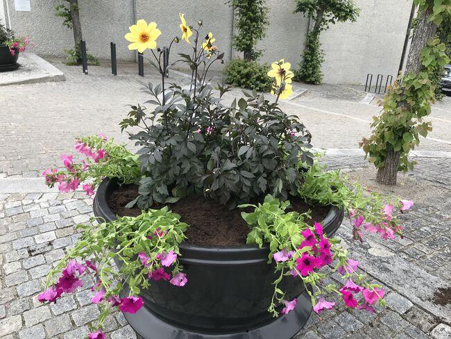 Planter Rådhusplassen 28