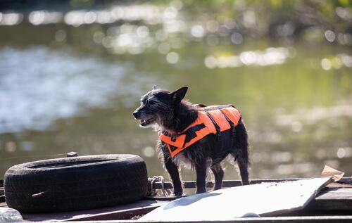 vest hund