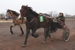 Øystein Nilsen i sulkyen bak hesten