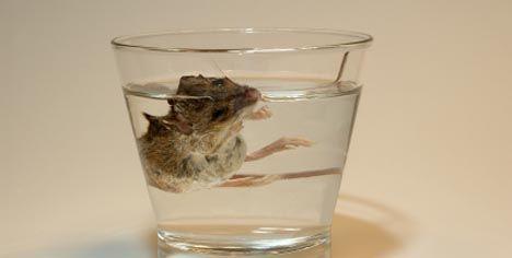 mus i vannglass_468